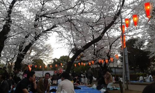 Ueno Park fenomeno hanami